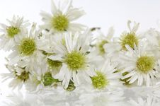Free Flower Stock Images - 14958744