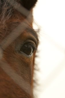 Free Horse S Eye Royalty Free Stock Photos - 14959278