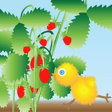 Free The Chicken Runs To Berries Stock Image - 14959701