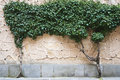 Free Tree On The Wall Royalty Free Stock Photo - 14965105