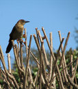 Free Bird In Tree Blue Sky Stock Photo - 14967630