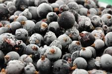 Free Currant Black; Royalty Free Stock Image - 14962196