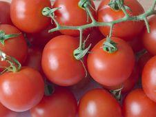 Free Tomato Stock Photography - 14962552