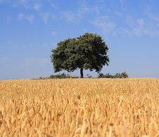 Free Lonely Tree Royalty Free Stock Photo - 14963075