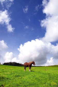 The Lonely Horse Royalty Free Stock Photo