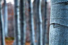 Free Beech- Wood, Abstract Composition Stock Image - 14963821