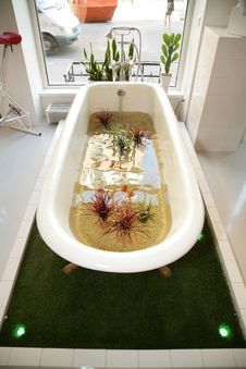Free Bath With Plants Royalty Free Stock Photo - 14964145