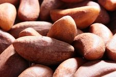 Free Brazil Nut Royalty Free Stock Photography - 14964507