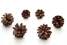 Free Fir Cone Royalty Free Stock Image - 14964666