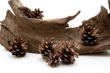 Free Fir Cone With Root Stock Photo - 14964710