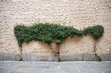 Free Wall Tree Royalty Free Stock Photo - 14965435