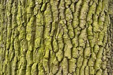 Free Tree Stock Photography - 14965912
