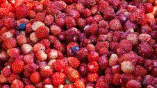 Free Wild Strawberry Stock Photography - 14967282