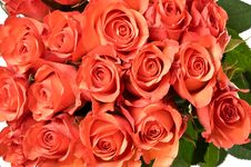 Free Bunch Of Red Roses On White Royalty Free Stock Photography - 14969527
