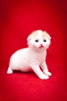 Free Little Fluffy Kitten Royalty Free Stock Image - 14969876