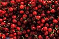 Free Sunlit Cherries Royalty Free Stock Image - 14979766
