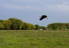 Free Flying Stork Stock Photography - 14970062