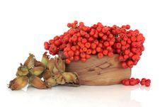 Free Autumn Harvest Royalty Free Stock Image - 14970876
