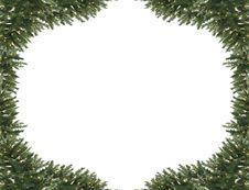 Free Pine Tree Frame Stock Photos - 14972643