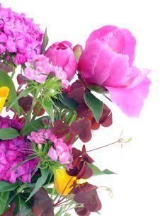 Free Summer  Flowers Postcard Stock Photo - 14972860