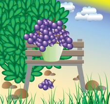 Free The Collected Grapes Cost On A Bench Stock Photo - 14972940