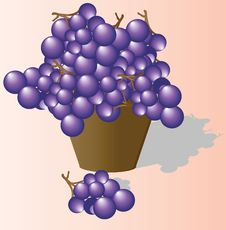 Free The Grapes Collected In Ware Royalty Free Stock Image - 14972956