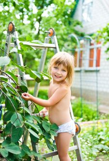 Free Little Girl Picking Cherries Royalty Free Stock Photography - 14973127