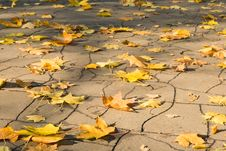 Free Yellow Leaves On Asphalt Stock Photos - 14973133