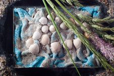 Free Composition With Sea Shells And Bent Stock Images - 14975014