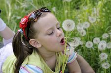 Free The Girl With Dandelions Royalty Free Stock Images - 14977879