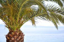 Free Palm Tree Stock Image - 14978791