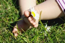 Free Baby Feet With Flower Royalty Free Stock Photos - 14979658