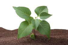 Free Young Plant Stock Photos - 14979753