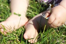 Free Baby Feet On The Grass Stock Photography - 14979782