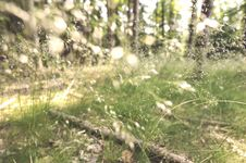 Free Summer Forest Stock Image - 14979931