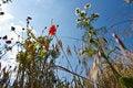 Free Flower Field Stock Photo - 14980880