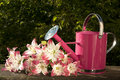 Free Watering Can For Flowers Stock Photo - 14983240