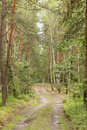 Free Forest Road. Royalty Free Stock Photography - 14984517