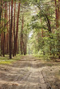 Free Forest Road. Royalty Free Stock Photo - 14984535