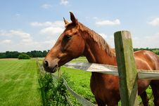 Free Horse Royalty Free Stock Photo - 14980765