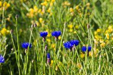Free Field Flowers Stock Photos - 14981093