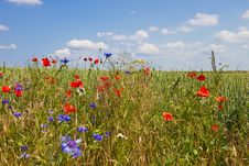 Free Flower Field Stock Image - 14981171