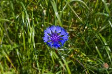Free Field Flowers Royalty Free Stock Photography - 14981217