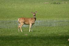 Free Deer Looking Up Stock Photo - 14981310