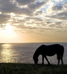 Free Horses Royalty Free Stock Image - 14981556