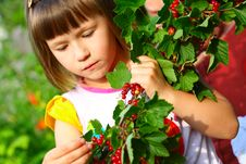 Free The Child Holds A Branch With Berries Royalty Free Stock Photo - 14981655