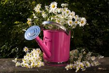 Free Watering Can For Flowers Royalty Free Stock Photo - 14983265