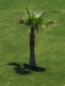 Free Small Palm Tree Stock Image - 14984641
