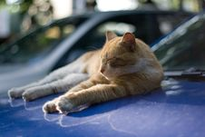 Free Red Cat Sleeping On The Hood Of A Car Stock Photos - 14984883