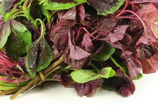 Free Amaranth Vegetable Royalty Free Stock Photo - 14986215